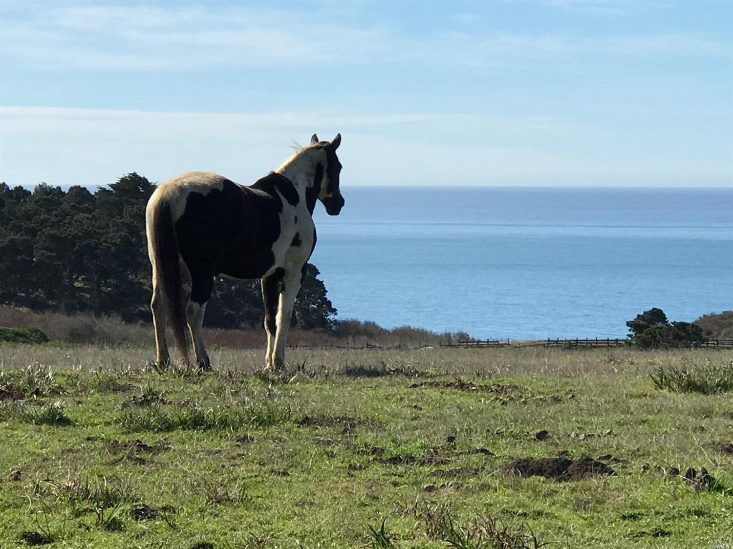 Curley -Horse enjoys view.