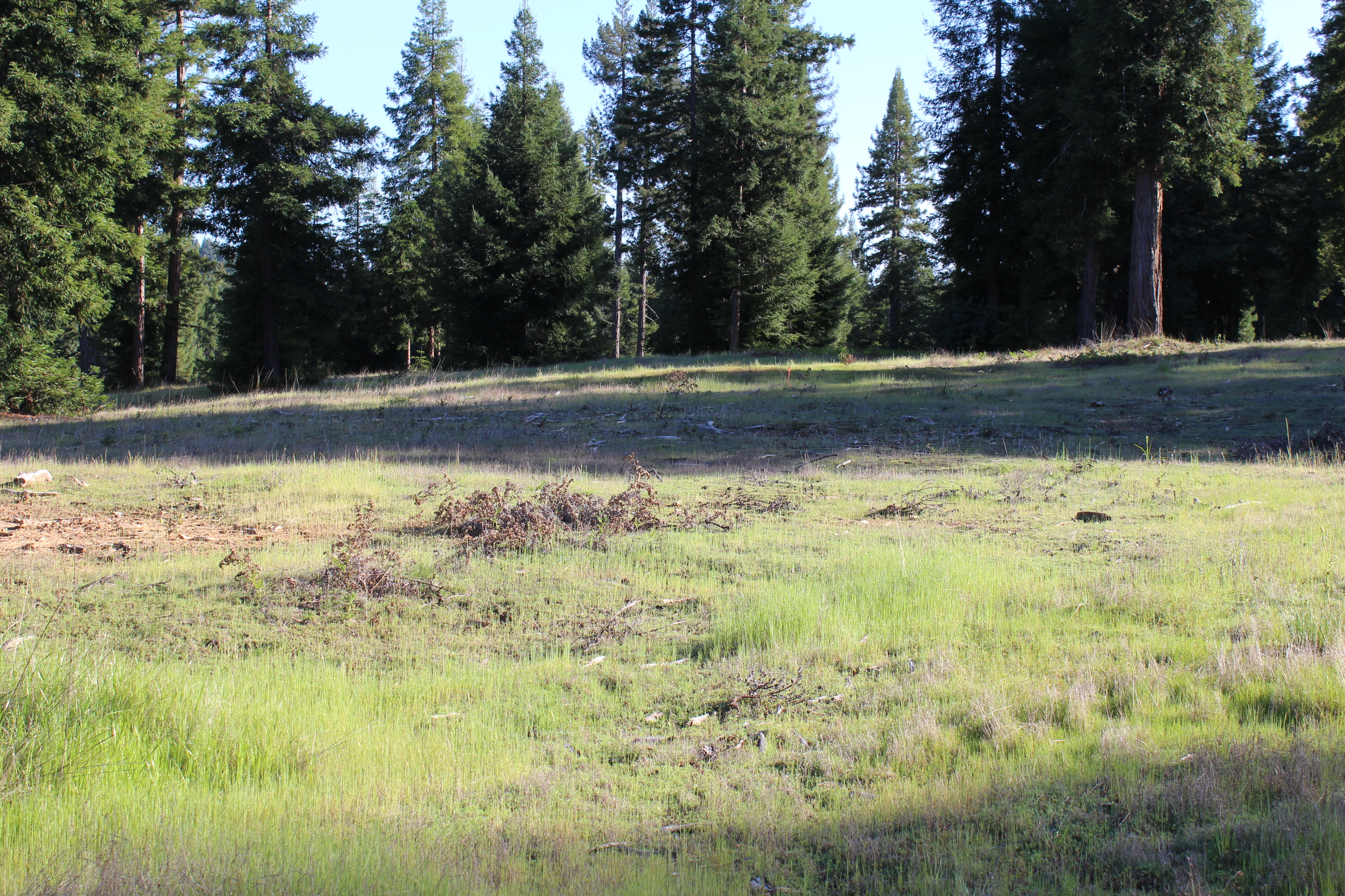 Such a pretty setting...work around the redwoods or do a 3 acre conversion (permit required)