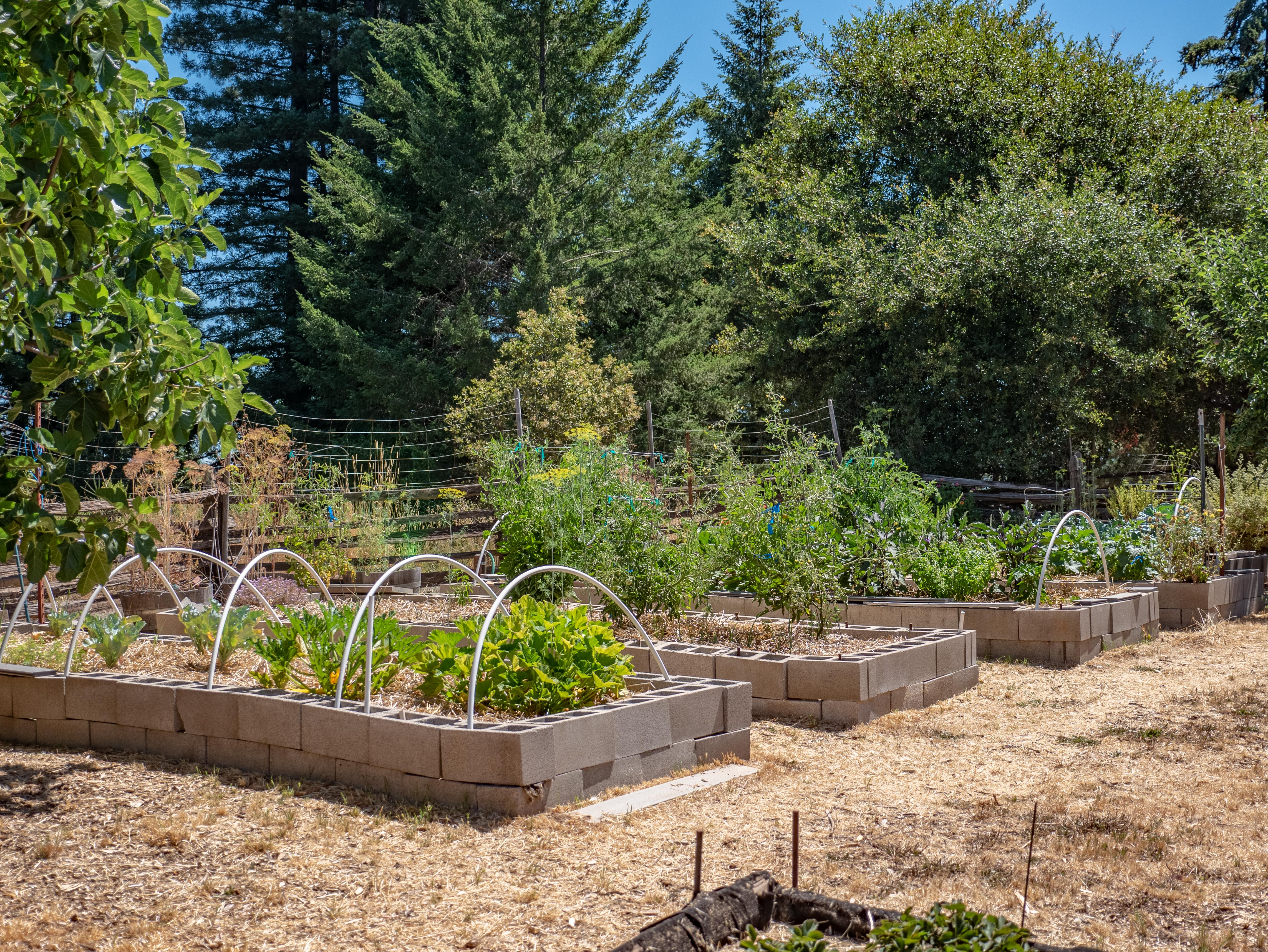Raised bed gardens with timed irrigation.