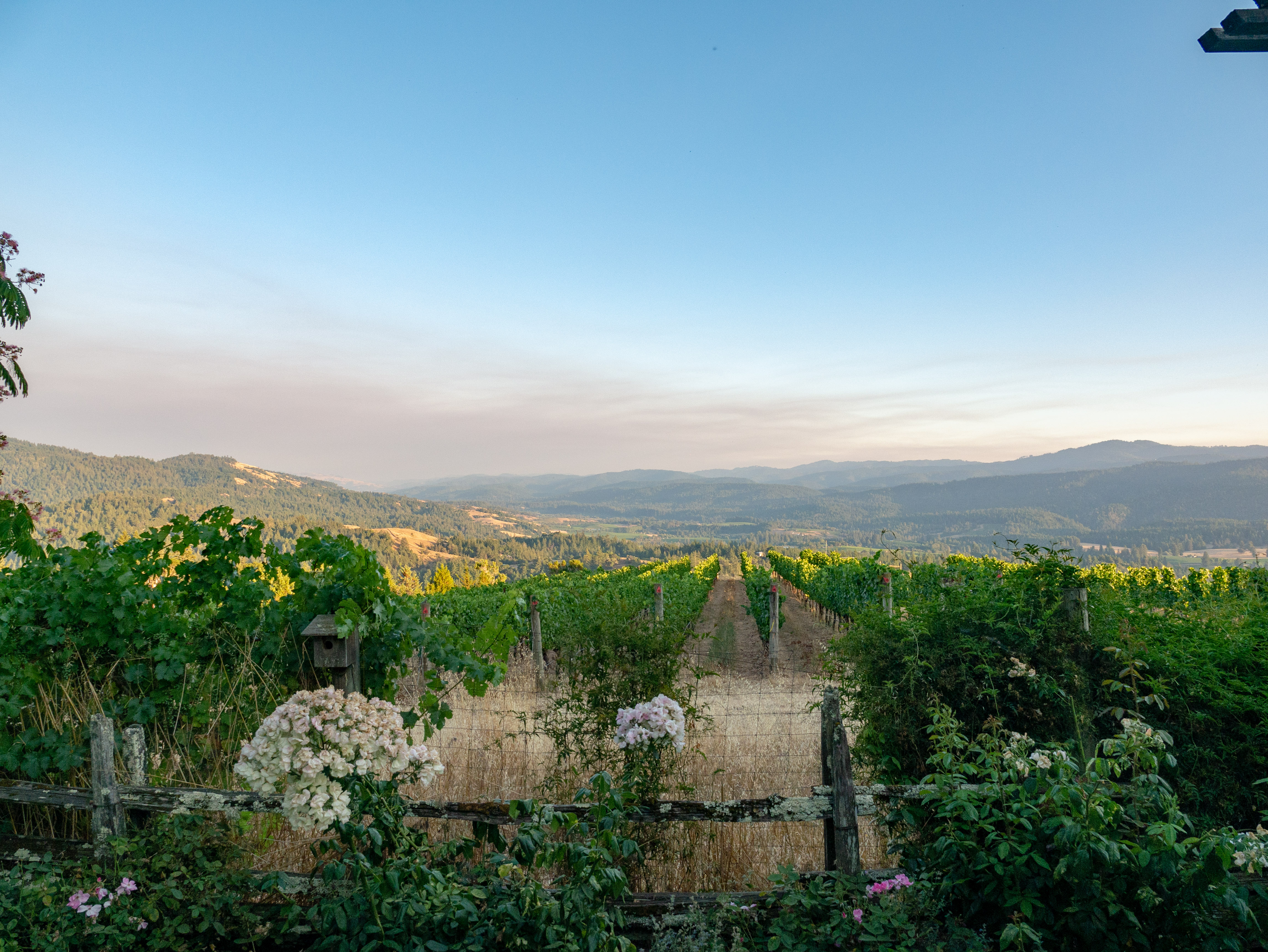 looking over the vineyard to the valley below
