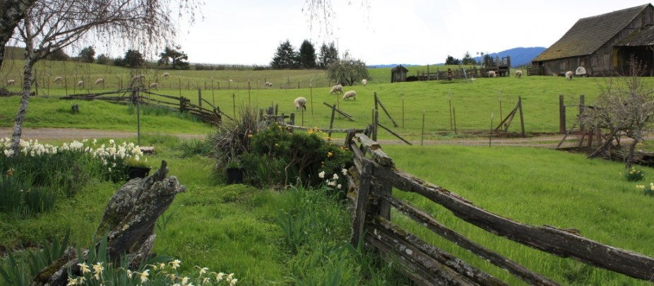 Mendocino county anderson valley real estate ranches for Country homes with acreage for sale